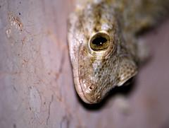 Gecko - by agelakis