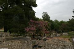 GR06 0714 Olympia (Templar1307) Tags: travel temple ruins 2006 greece grecia zeus olympia classical griechenland grce elis olympicgames olympiad santuary     grkenland   ilida      olimpiya