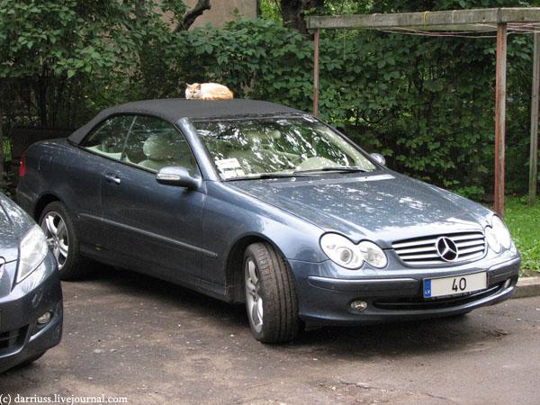 riga_cars_cat