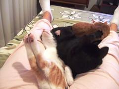 ...ou  impresso minha? (Jussara R.) Tags: cats pets gatos