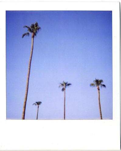 mesa palms