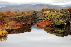 Autumn at Þingvellir (sylviatrausta) Tags: autumn red fall nature water colors landscape iceland haust thingvellir landið reflaction beautyful Þingvellir naturesfinest haustlitir naturefinest nikond40x natureoutpost thebestofgodscreation