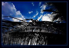 A la sombra en la playa (.Kikaytete.QNK) Tags: africa gambia vacaciones 2007 wonderworld abigfave wowiekazowie flickrelite onlythebestare kikaytete allnicethink