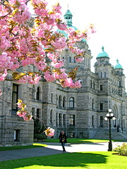 Spring blossoms in Victoria (ZedZap Photos) Tags: city travel canada tourism cherry landscape spring bc canadian vancouverisland april cherryblossom legislature hdr cherrytree rattenbury victoriabc nationalgeographic parliamentbuilding pinkblossom springblossom captaingeorgevancouver britishcolumbiaparliamentbuildings bcgovernment bellevillestreet quarzoespecial zedzap victoriaattraction legislativeassemblyofbritish
