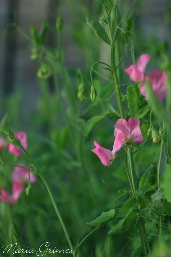 garden 820 (550 x 825)