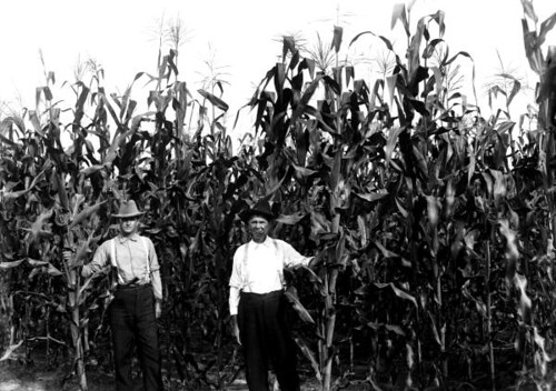 Demonstration agent O.L. Mizelle in field of corn with farmer J.S. Howard: Bradford County, Florida