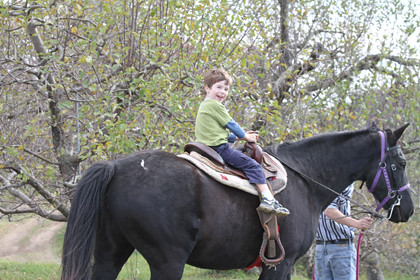 Apples and Horses and donuts, oh my!
