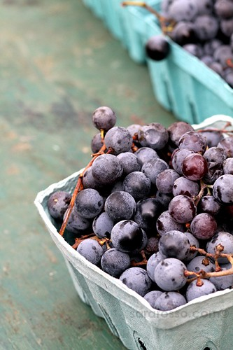 Concord grapes at Union Square Greenmarket Farmers Market, New York City