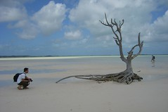 lone tree at harbour island (photos_mweber) Tags: bahamas eleuthera lonetree harbourisland lonetreebahamas