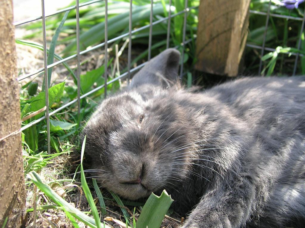 Gasket asleep in his run