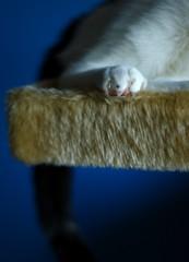 My cat Spot.