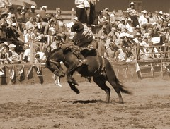 bronco ride (queen of the tundra) Tags: horse cowboy audience country crowd idaho rodeo bronc riggins