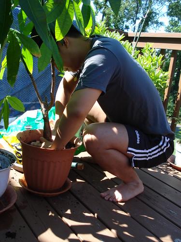 tsuyoshi plants