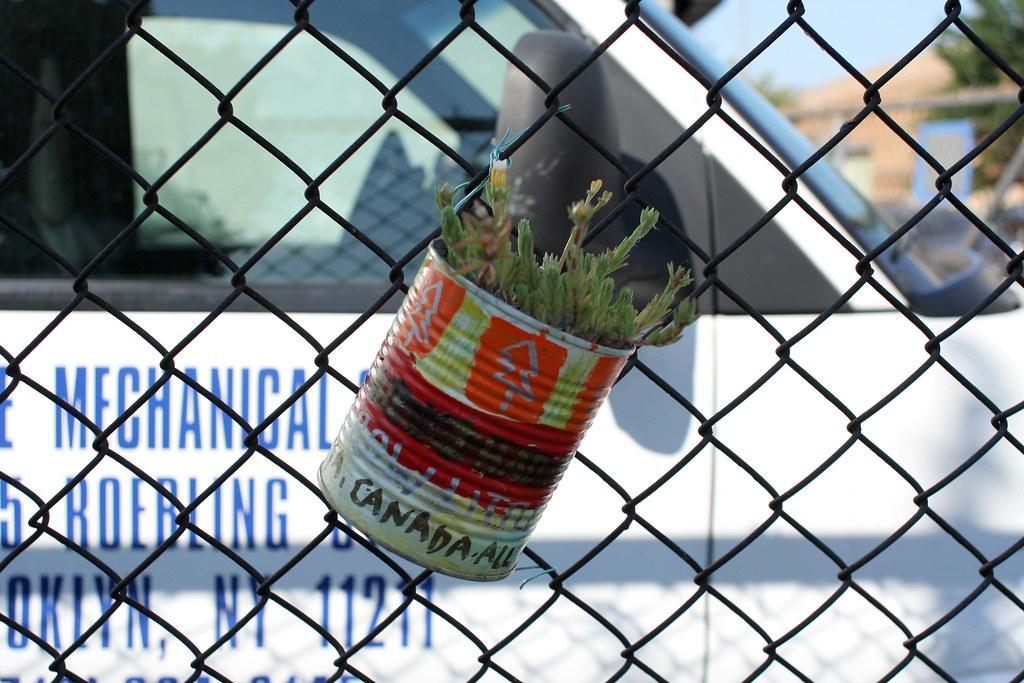 More plantfiti