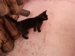 Meetup Cat