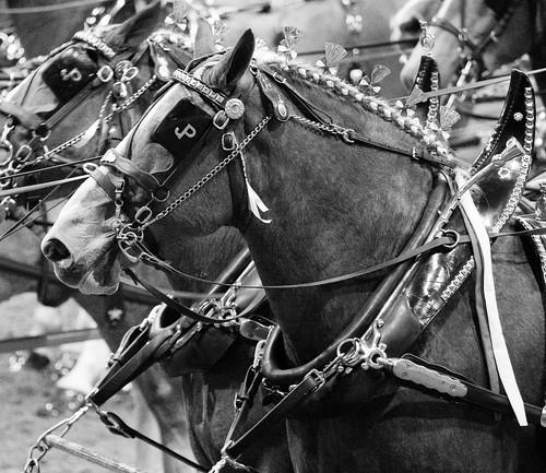 JP Horse