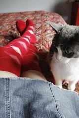 Little Lump (Angela.) Tags: red socks digital cat canon hearts rebel bed raw kitlens mini argyle paisley canonefs1855mm xti 400d canondigitalrebelxti otks