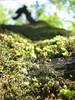 تار عنكبوت (A.T.E.F.E.H) Tags: super micro درخت آبرود مایکرو سوپر عاطفه نمك تار عنكبوت تنكابن عاطی شهشهانی