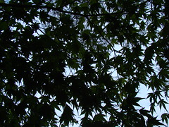 Kubota Gardens, Seattle (shawn_bee) Tags: seattle kubotagardens seattleflickrmeetup