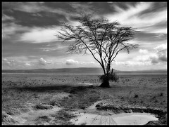 tree (A12Bxl) Tags: africa blackandwhite bw tree abandoned water clouds eau noiretblanc kenya space empty nb hills lonely nuages plain arbre deserted espace verlassen plaine collines abandonn dsert