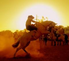 Contra o sol (Eduardo Amorim) Tags: brazil horses horse southamerica brasil caballo cheval caballos cavalos pferde cavalli cavallo cavalo gauchos pferd soe riograndedosul pampa hest hevonen campanha brsil chevaux gaucho  amricadosul bag fronteira hst gacho  amriquedusud  gachos  sudamrica suramrica amricadelsur  sdamerika jineteada supershot   americadelsud mywinners gineteada artlibre  americameridionale holidaysvacanzeurlaub campeiros diamondclassphotographer campeiro eduardoamorim alemdagqualityonlyclub