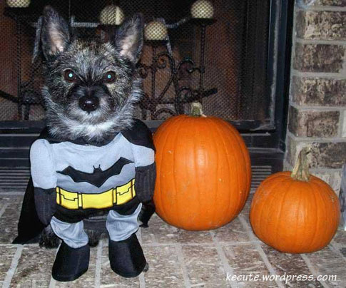funny halloween. Funny, halloween, Humor.