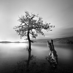 Sallochy Bay Tree long exposure