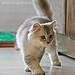 ネコ:cat walk