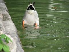Parque del Retiro - Madrid (liormania) Tags: madrid park city parque lake nature water birds spain ciudad m espana retiro spanien spagna espagna parquedelretiro espain oldmadrid liormania bakalu