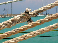 Ropes and Splices (RobW_) Tags: june harbour greece ropes zakynthos 2007 splice diaryphoto mdpd2007 jun2007 mdpd200706 15jun2007