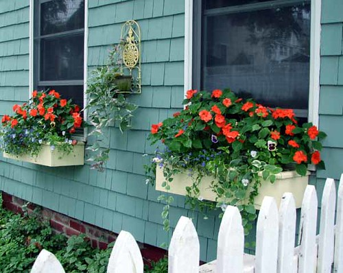 Window boxes July