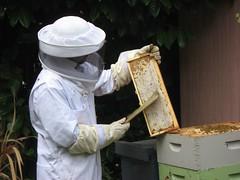 Beekeeping 2500