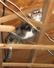 Cat In A Cold Wood Roof