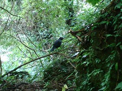 DSC05501 (shineoon1) Tags: waterfall hiking yanming