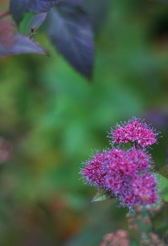 Autumn Colours -3