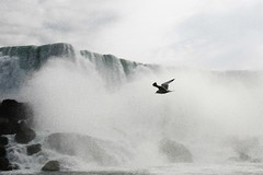 Niagara in the wind (.Maria.B.) Tags: canada water niagarafalls agua eau wind seagull niagara falls cataratas acqua gaviota aigua mouette shui cataratasdelniagara coco2020 chutesdunigara cachoeirasdoniagara