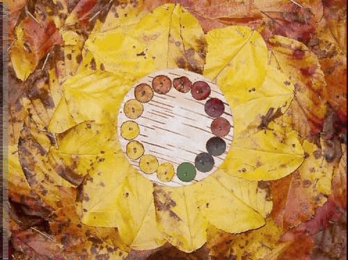 Crab Apple Autumn Fire Colour Wheel Time Lapse