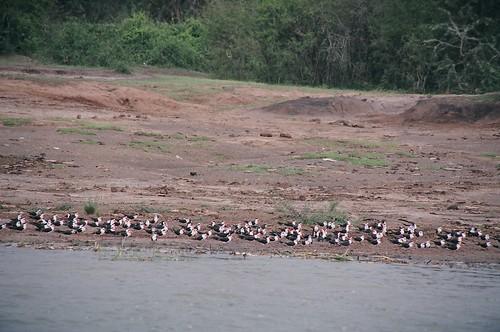 Uganda - QENP Rich Bird Life 7