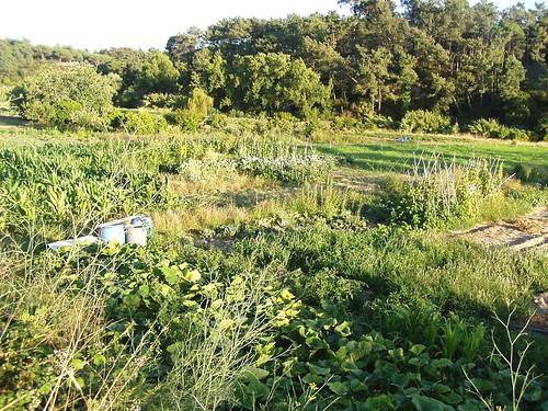 fotografia alojada em www.flickr.com- Varzea com hortas em Alfarim junto à estrada da Ponte do Concelho