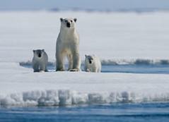 arctic.tale.081307