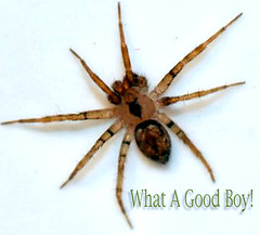 My spider