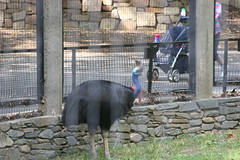 DC Zoo 134 (iamjosh) Tags: dczoo
