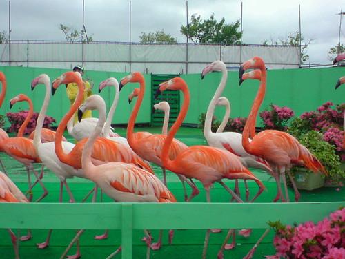 世界大動物園