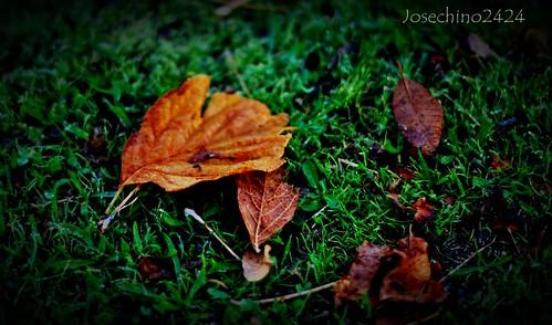 Mañanas de otoño.