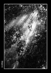 (stefanopa) Tags: life light bw roma nature water rain pb bn eur acqua pioggia luce vita 50club stepane
