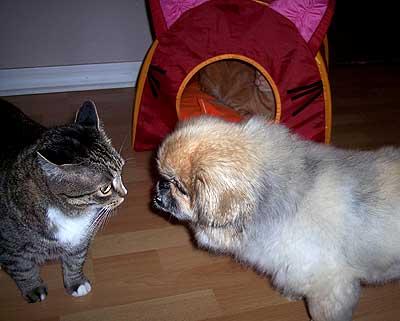 cat_tentLR1