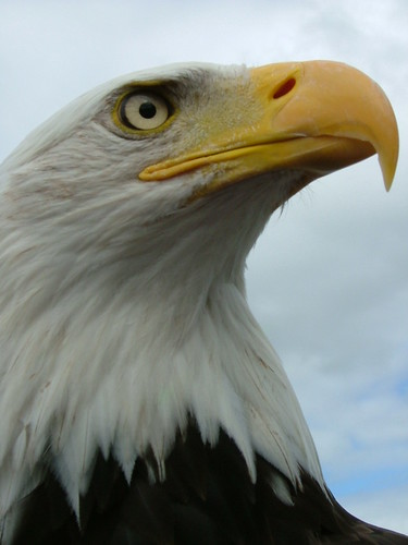 This was taken at an Eagles flying centre near us in Sligo Ireland.