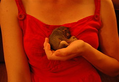 maris and baby squirrel - by Bird in the Hand