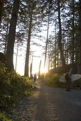 Oregon037.jpg (evanmitsui) Tags: sunset oregon cormorants nesting archcape oswaldstatepark