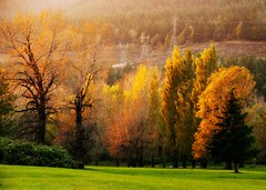 Autumn Glory (Darrell Wyatt) Tags: autumn trees golfcourse homesweethome northbonneville ilovewhereilive anawesomeshot theunforgettablepictures